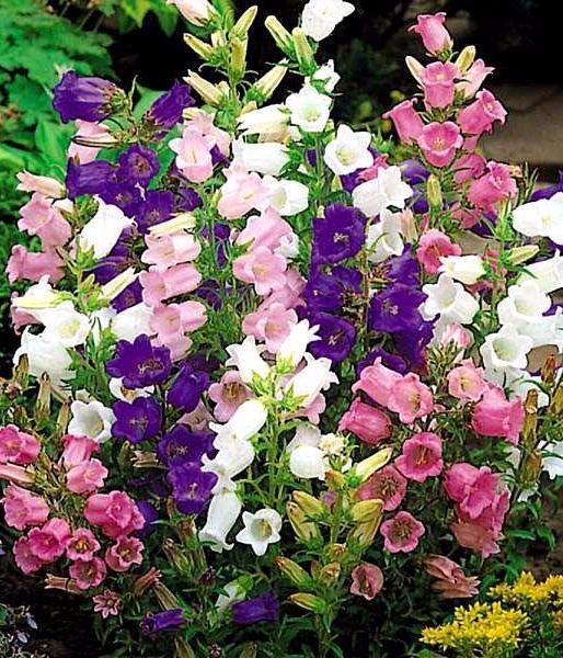 Цветы садовые большие виды